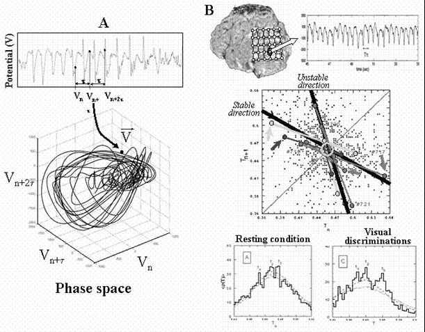 disentangling the dynamic core  a research program for a neurodynamics at the large
