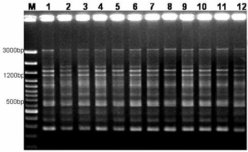 Figure 2 Molecular Analysis Of Genetic Stability In Long
