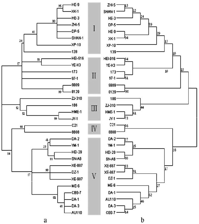 phylogenetic analyses of s kinabaluensis [invertebrate • 2013] tritetrabdella kinabaluensis • genetics and morphology of the genus tritetrabdella (hirudinea, haemadipsidae) from the mountainous rain forests of sabah, borneo, reveal a new species with two new subspecies.