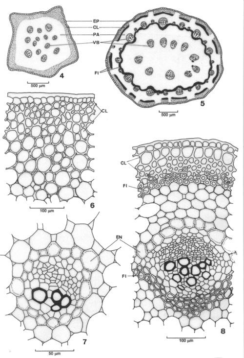 pin herbaceous stem diagram on pinterest
