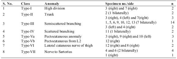 clasificación y análisis fascicular de las variantes en el patrón, Muscles
