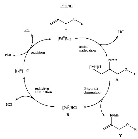 Oxidative Amination Mechanism in Oxidative Amination