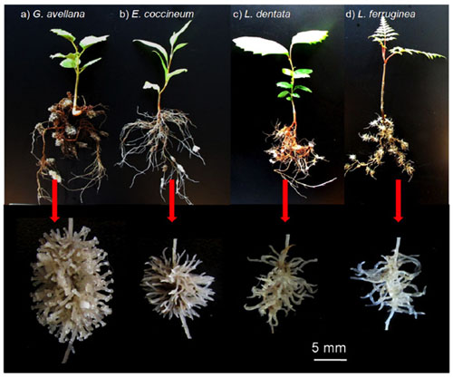 Role Of Roots In Food Production For Plants