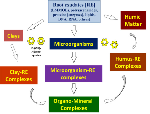 Biogeochemical processes at soil root interface for Soil forming minerals