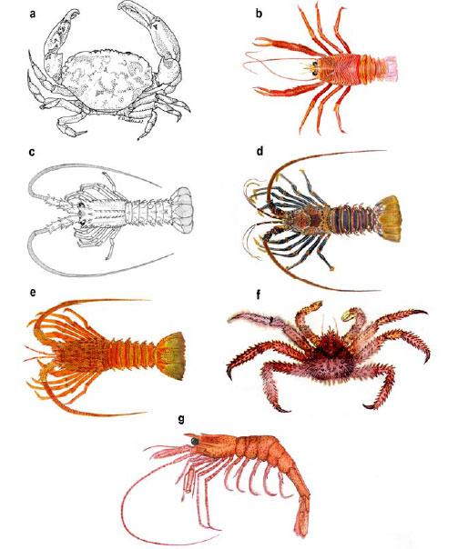 Latin american journal of aquatic research - Zoogeografía de los ...