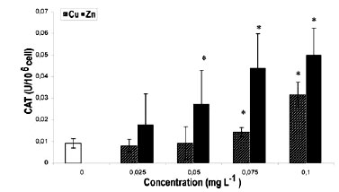 a research on the effects of the metal copper sulfate on the rate of catalase activity Enzyme activity lab measuring the effect what effect does increasing the concentration of catalase have on the rate the effect of copper sulfate on catalase.
