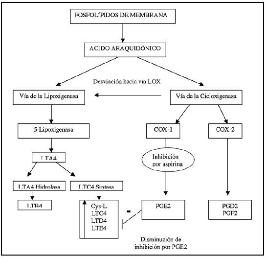 sintesis de esteroides anabolicos