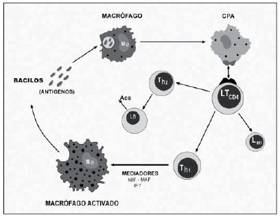 metabolismo de esfingolipidos y esteroides