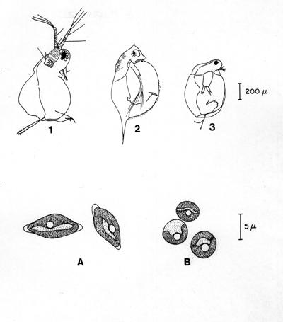 a study on ceriodaphnia Research and development technical report cecom-tr-95-2 toxicity study of selected military batteries authors matt hanson p.
