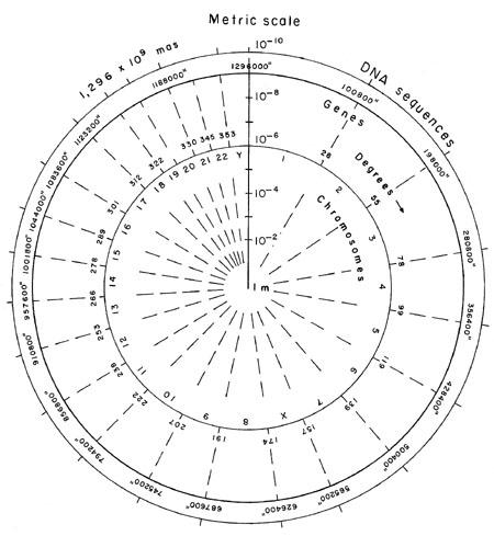 Jewish numerology 80 image 5