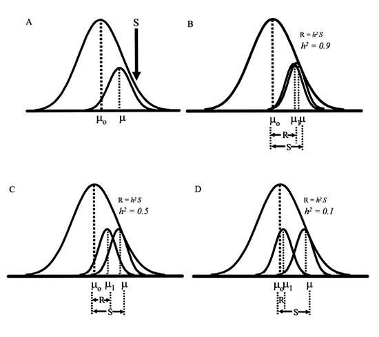 (B) Directional selection