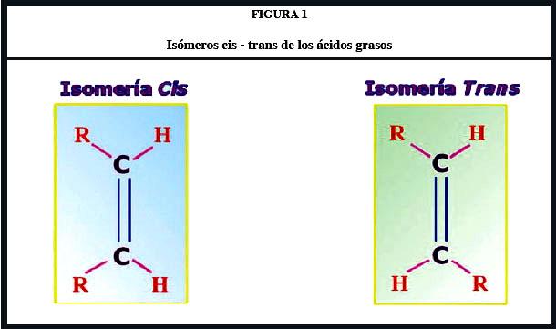 Formula General de Los Acidos Grasos de Los ácidos Grasos Debe