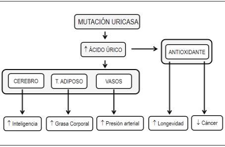 acido urico remedios caseros para bajarlo acido urico dieta baja en purinas acido urico 8.3 mg dl