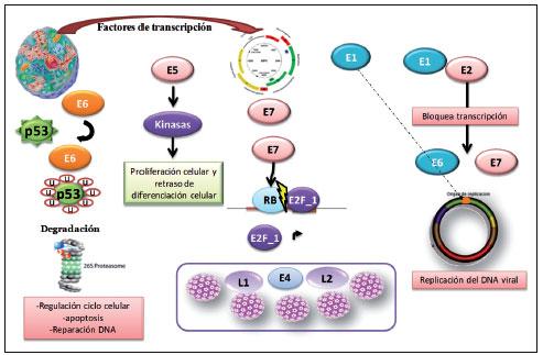 Virus Kawasaki En Espa Ef Bf Bdol