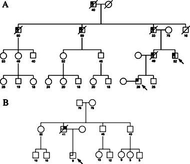 familia genealogia: