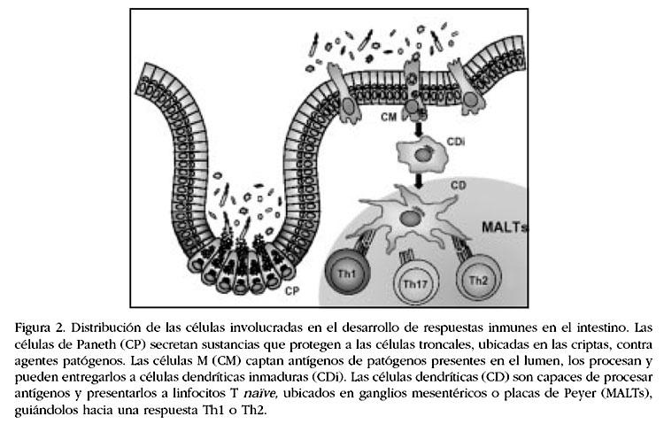 igenetics a molecular approach pdf