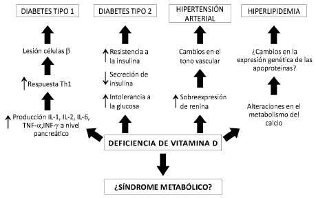 mecanismo de accion de las hormonas proteicas y esteroides