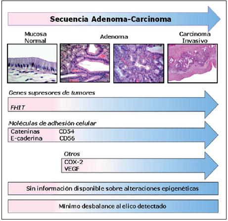 que contienen los esteroides anabolicos