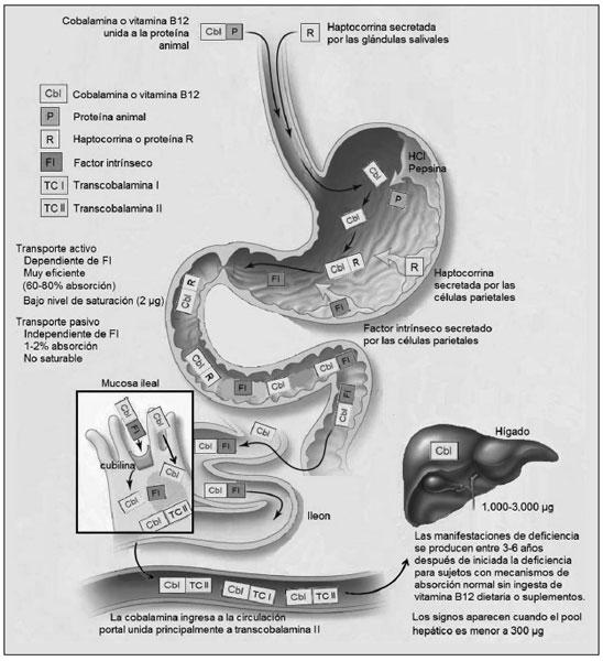 Batido acelerador de metabolismo