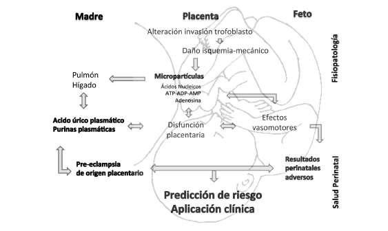 acido urico signos y sintomas el acido urico produce fiebre el acido urico provoca comezon